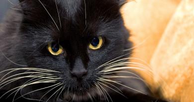 Chiêm bao thấy mèo đen mang ý nghĩa gì và nên đánh con số nào