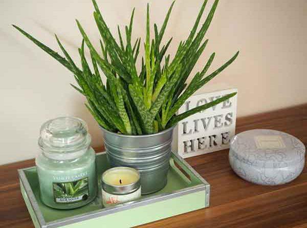 3 loại cây phong thủy cho phòng ngủ luôn thoáng mát, thoải mái nhất
