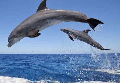 Phân tích ý nghĩa giấc mơ thấy cá heo là điềm báo lành hay dữ?